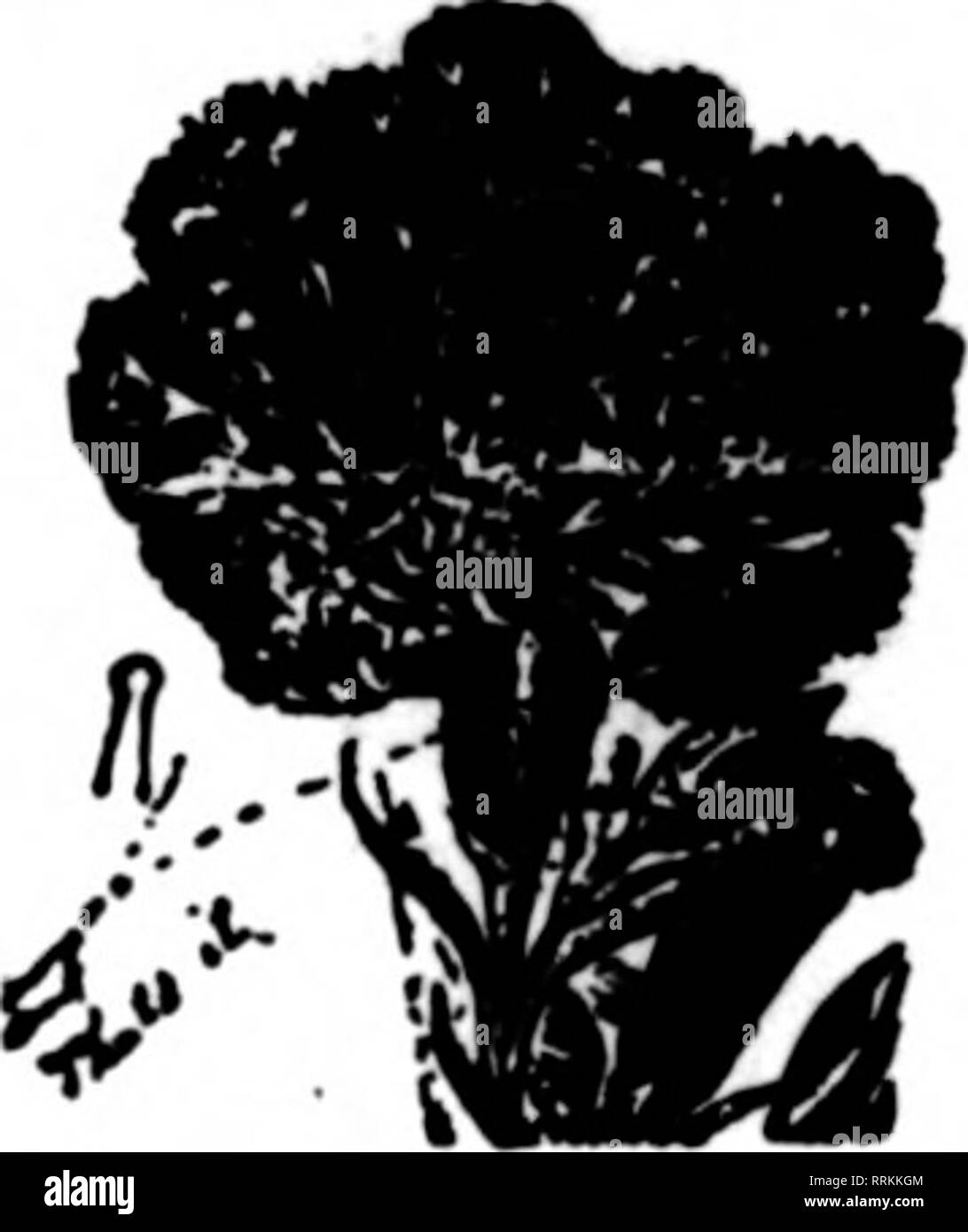 Florists' review [microform]  Floriculture  Mi'ntlon Thi