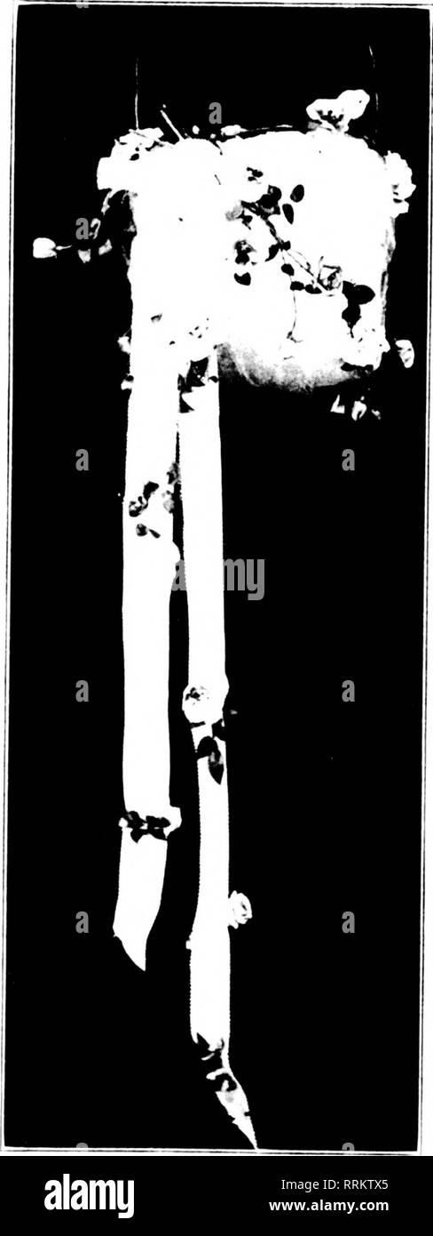 Alii Black and White Stock Photos & Images - Alamy