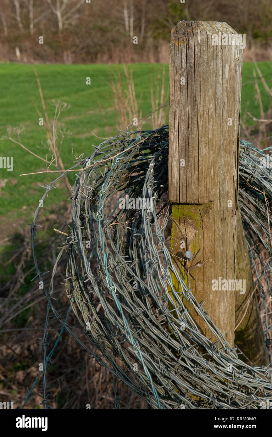 A roll of barbed wire hanging on a fence post by the side of a field. - Stock Image