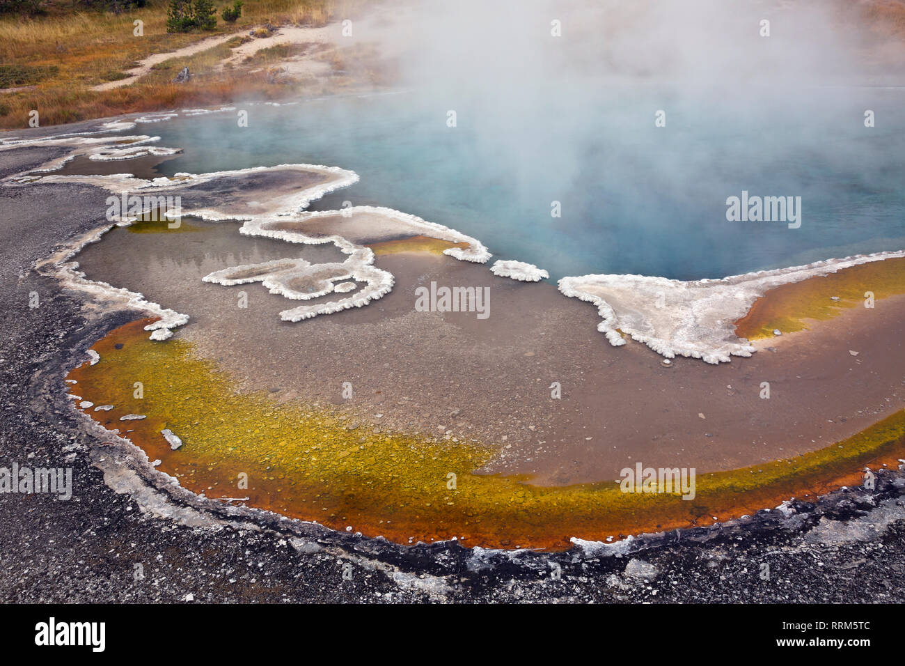 WY03838-00...WYOMING -  Columbia Spring with a colorful area of cyanobacteria edged with fanciful shapes of the bulbous sinter formations along the sh - Stock Image