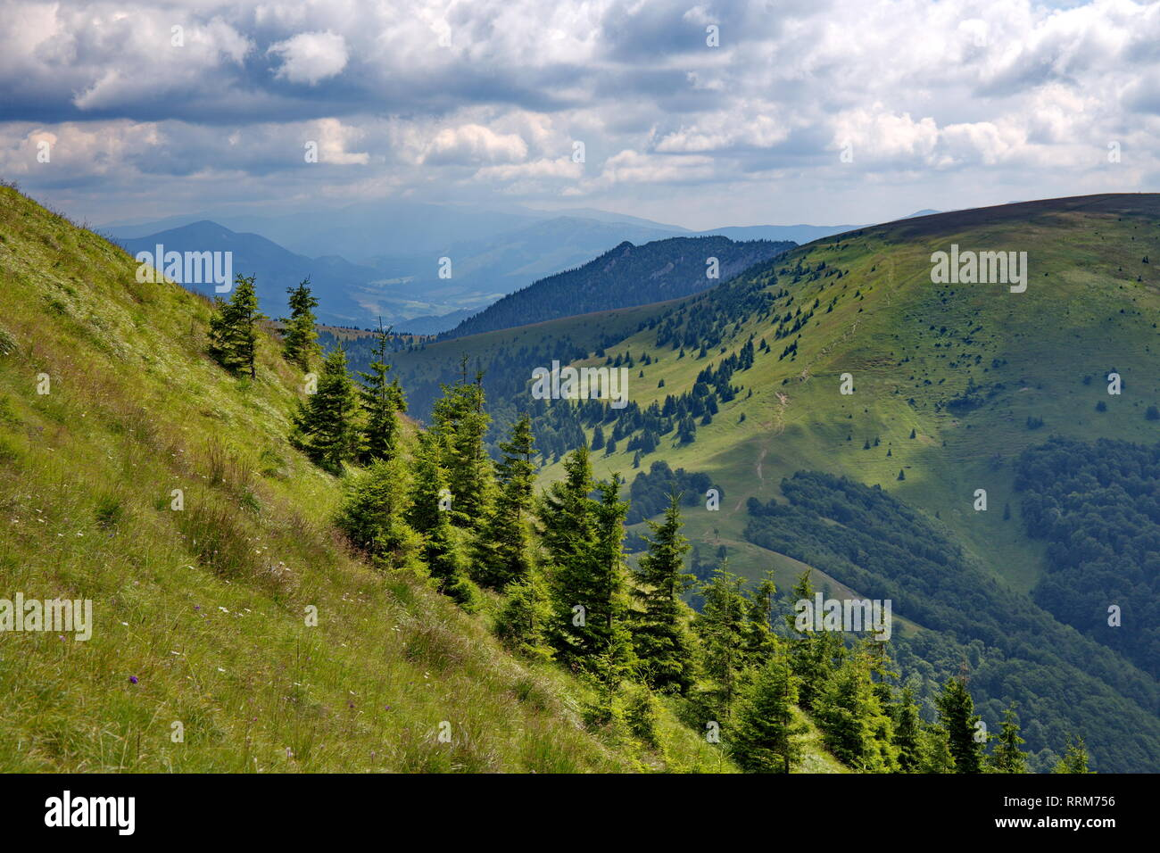 Intensive green colors of spruces and slope of mountains in summer time - Stock Image