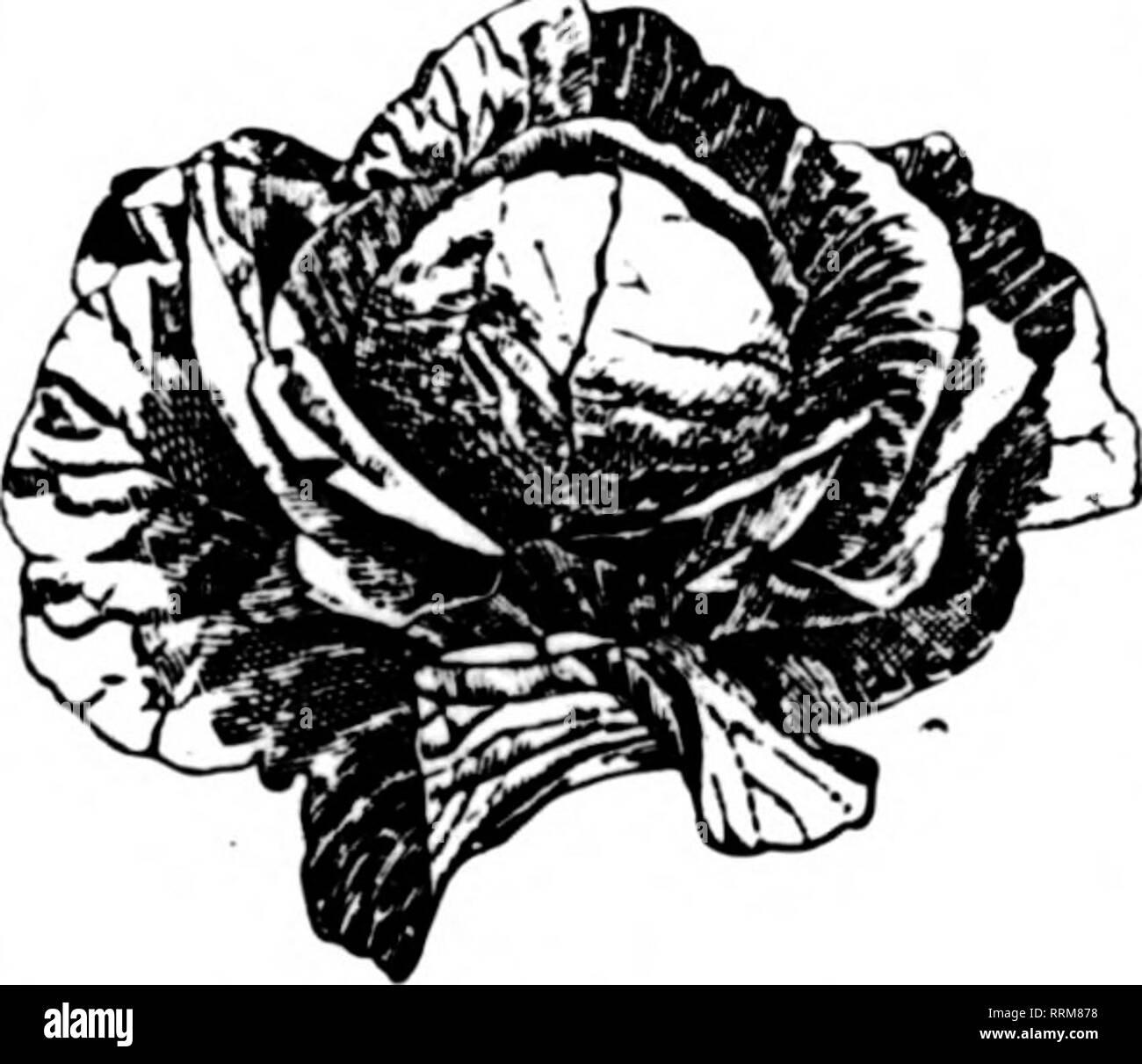 Florists' review [microform]  Floriculture  CYCLAMEN