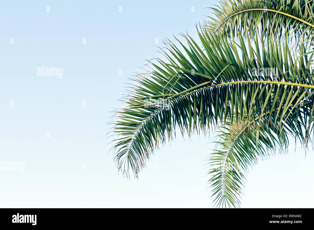 Palm leaf on blue sky with copy space Holy Week Easter concept Long weekend spring break. Palm sunday - Stock Image