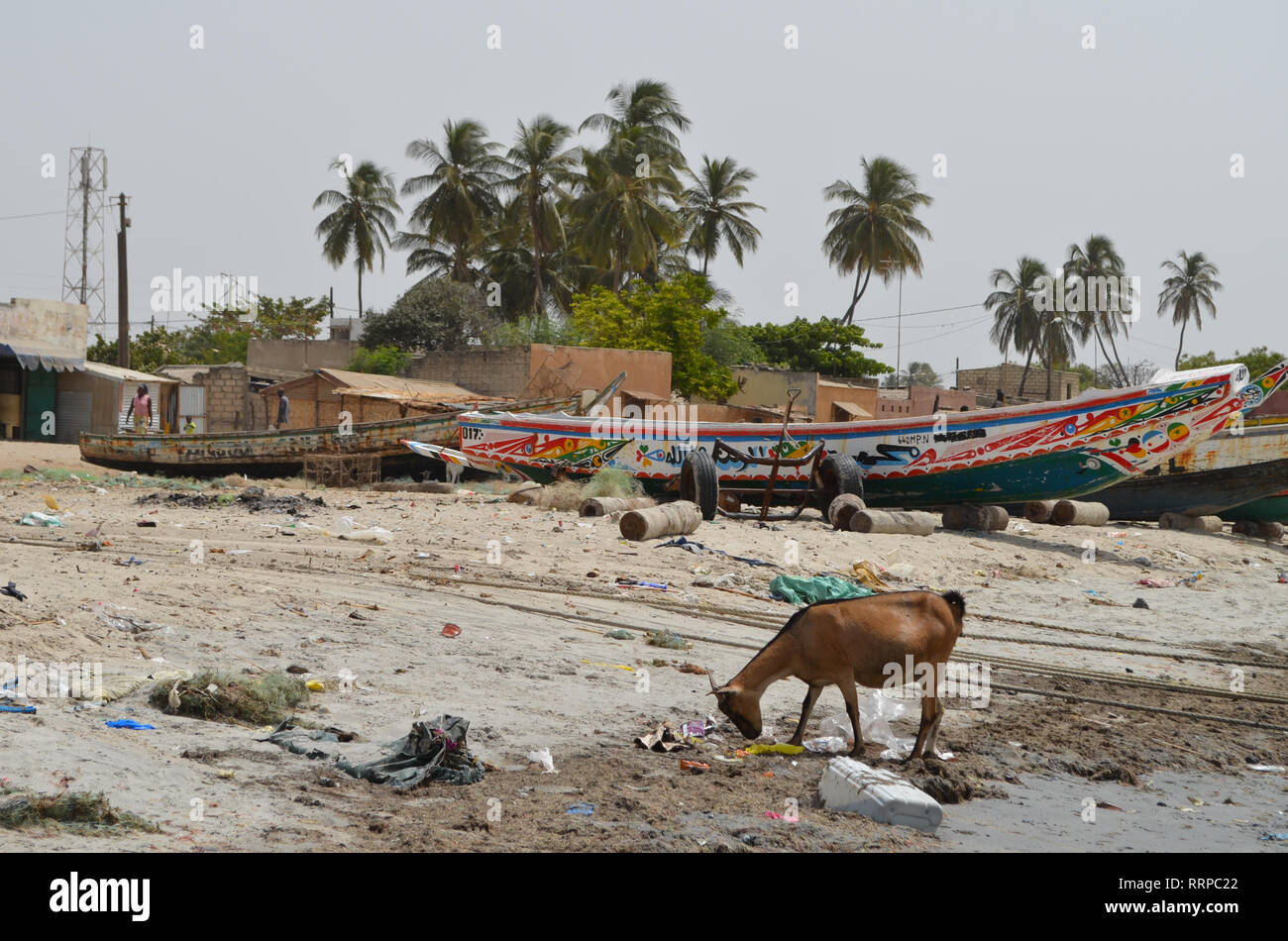 A goat forages for food amongst the litter in a beach on Senegal's Petite Cote, Western Africa - Stock Image