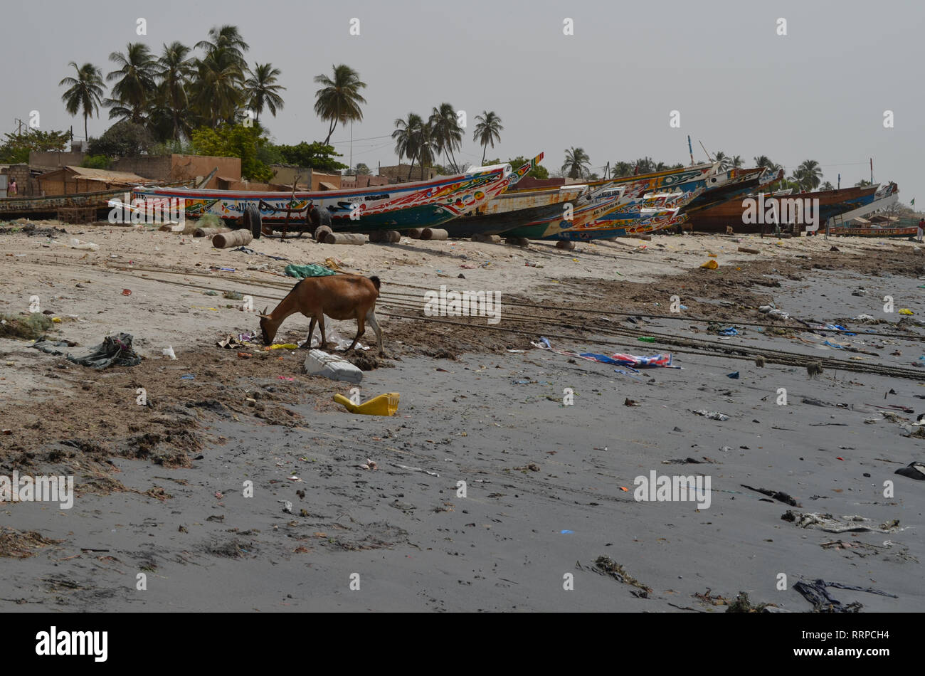 A goat forages for food amongst the litter in a beach on Senegal's Petite Cote, Western Africa Stock Photo