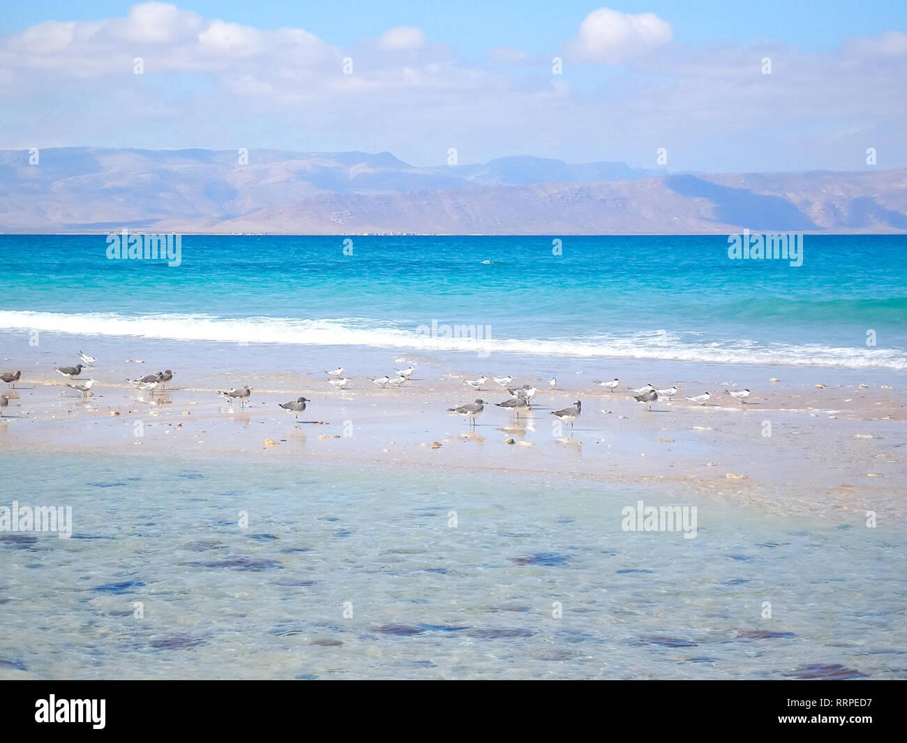 Sea coast of Yemen, empty sea beach. Sea coast of Yemen, empty sea beach. - Stock Image