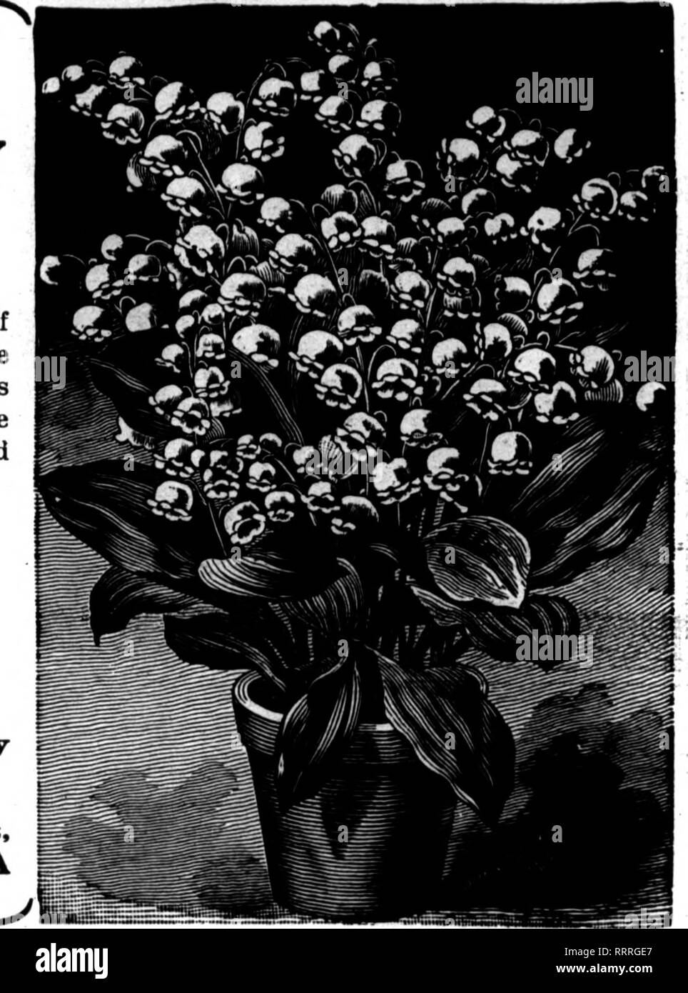 Florists Review Microform Floriculture Fbbbd X 1 1815 Tlic