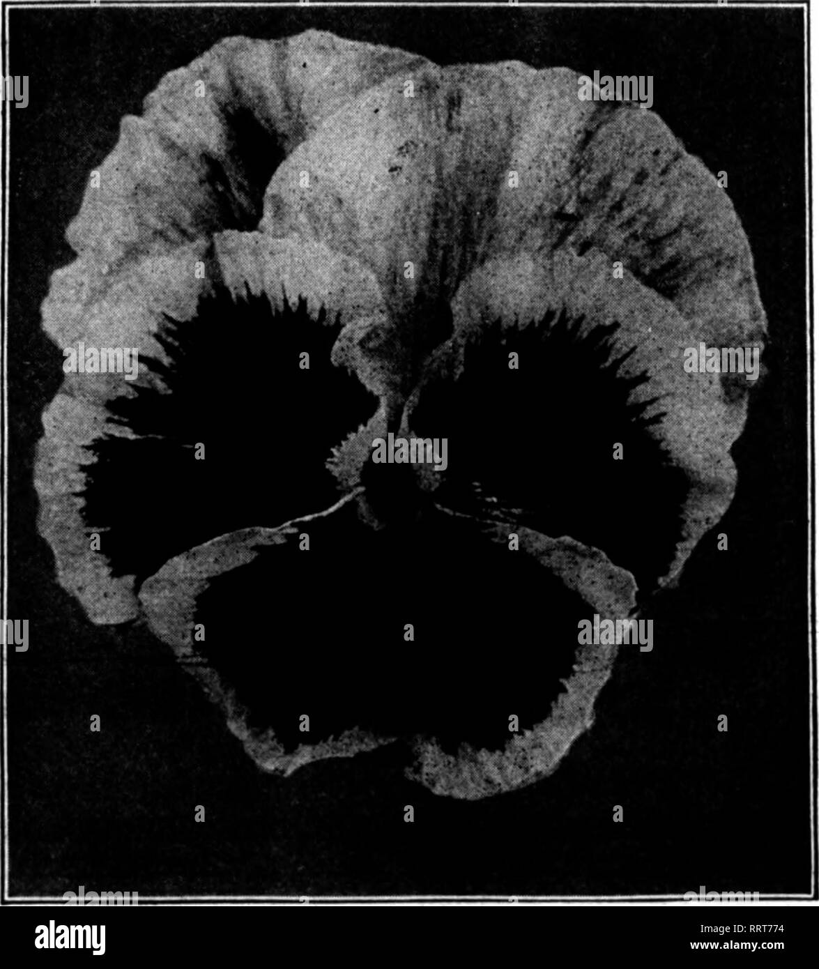Florists' review [microform]  Floriculture  AUGUST 12, 1915  The