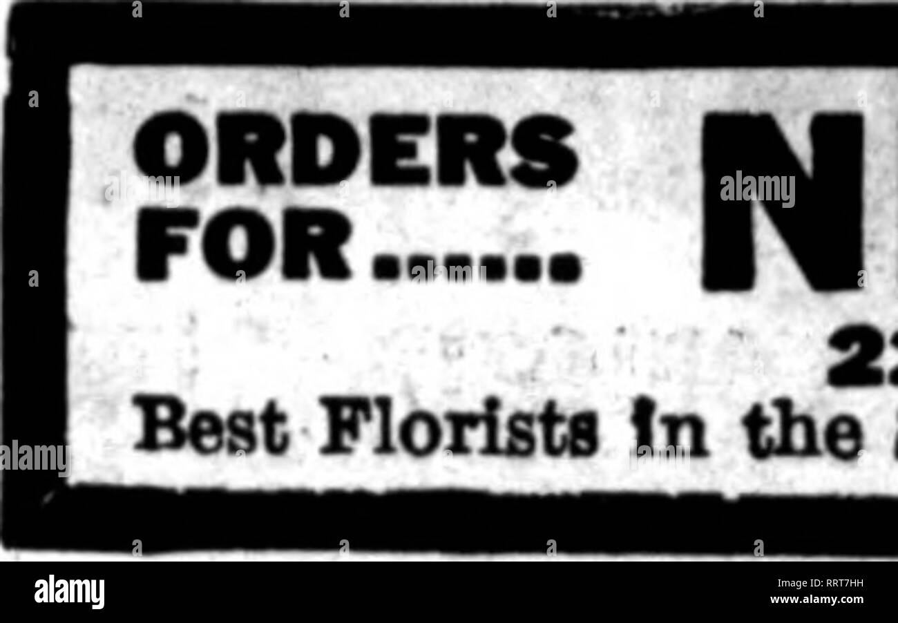 """. Florists' review [microform]. Floriculture. Th» florist* whose cards appear on the pases carrying this head, are prepared to All orders """"— from other florists lor local delivery on the usual basis. — ? - """""""" Alexander McConnell' 611 FiHh Avenue, corner of 49th St. NEW YORK CITY Teleffraph orders forwarded to any part of the United Statea. Canada and all the principal dttes of Europe. Heference er cash must aecompeny ell ordere from unknewn correependeate. Cable Addree* AIJDCCOIilllfc^ David Clarke's Sons 8289-2241 Broadway Tel. 1552.1553 Columbas NEW YORK CITY Out-of-town order - Stock Image"""