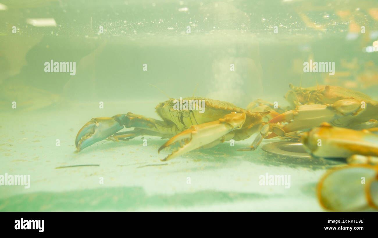 crabs in a glass tank at the Genoa spice market - Stock Image
