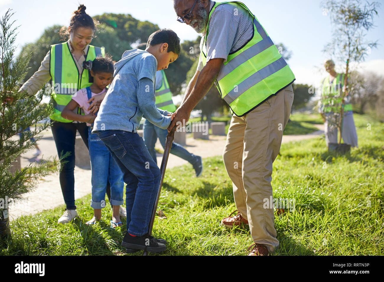 Multi-generation family volunteers planting trees in sunny park - Stock Image