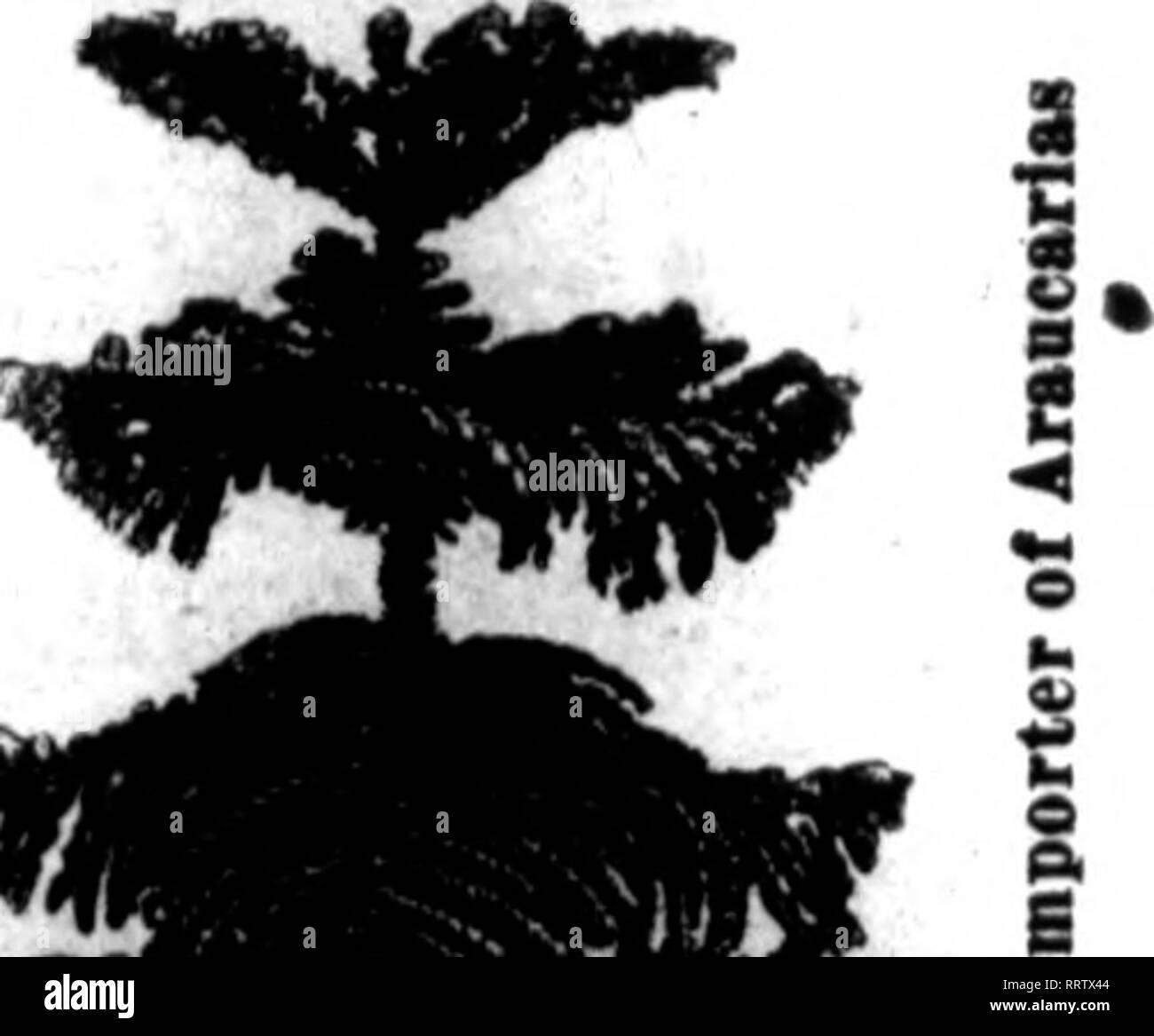 52206faf . Florists' review [microform]. Floriculture. joi.T 9, 1»14. The Florists'  Review 78 1 I ...