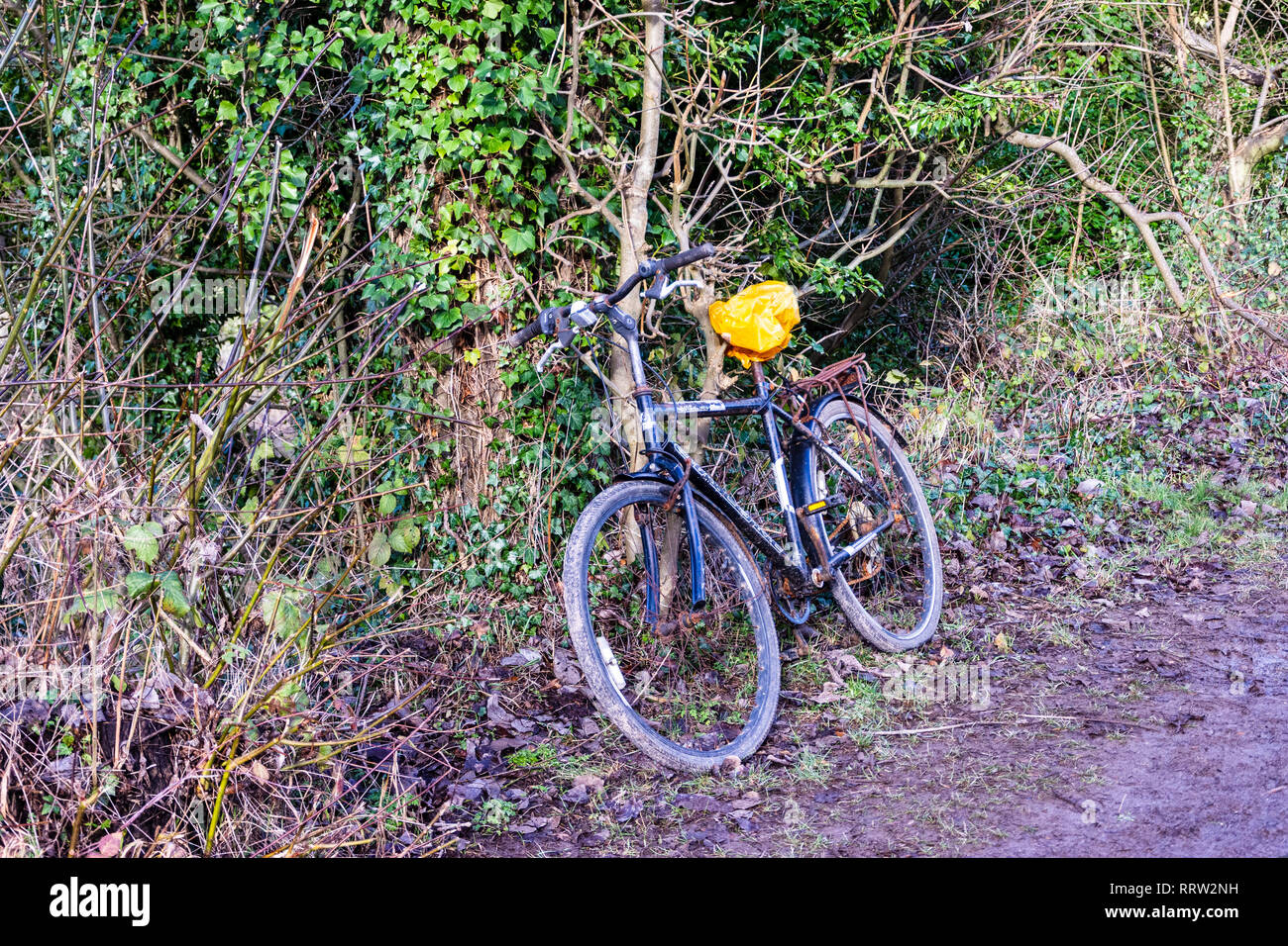 A pushbike with the saddle covered by a carrier bag resting againt an untidy hedge alongside a towpath Stock Photo