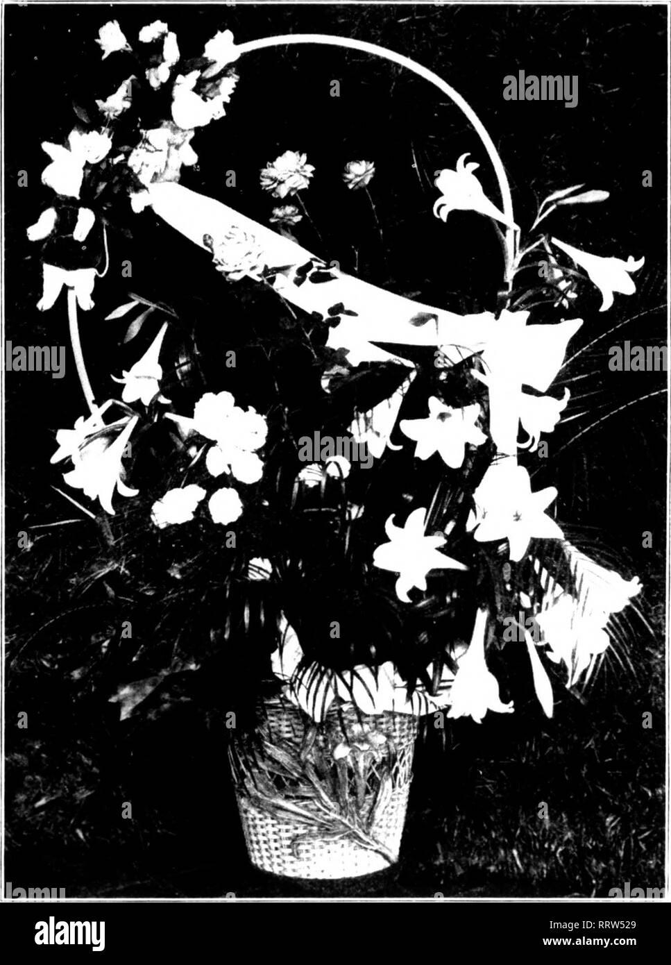 c99a87405cdd4 Florists' review [microform]. Floriculture. Ai'lur, Ki, .