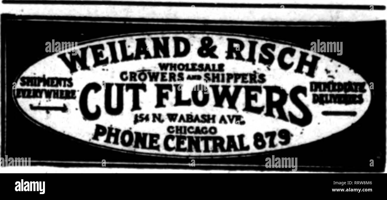 """. Florists' review [microform]. Floriculture. J.A.BUOLONG 82-86 E. Randolph Stroot, CHICAGO. ROSES, VALLEY •td WHOLESALE CARNATIONS eonufCD al ? BpoolaJty DnOWcR If Mention' The EeTlew wftcB yon write. CUT FLOWERS Hoerber Brothers '^""""^t^ o."""".Cut Flowers Greenhouses, Des Plaines, 111. Store, 162 N. Wabash Avenue, Chicago Long Distance Phone, Randolph 2768 ZECH & MANN WHOLESALE FLORISTS 30 E.Randolph St.,Cliicago Telepkaae CENTRAL 3284 GEO. REINBERG SSSS Cut Flowers CHOICE AMERICAN BEAUTIES We •wUl take care of your orders at reasonablt prices. Prompt attention. toa M. Wabash Av.. CHICA - Stock Image"""