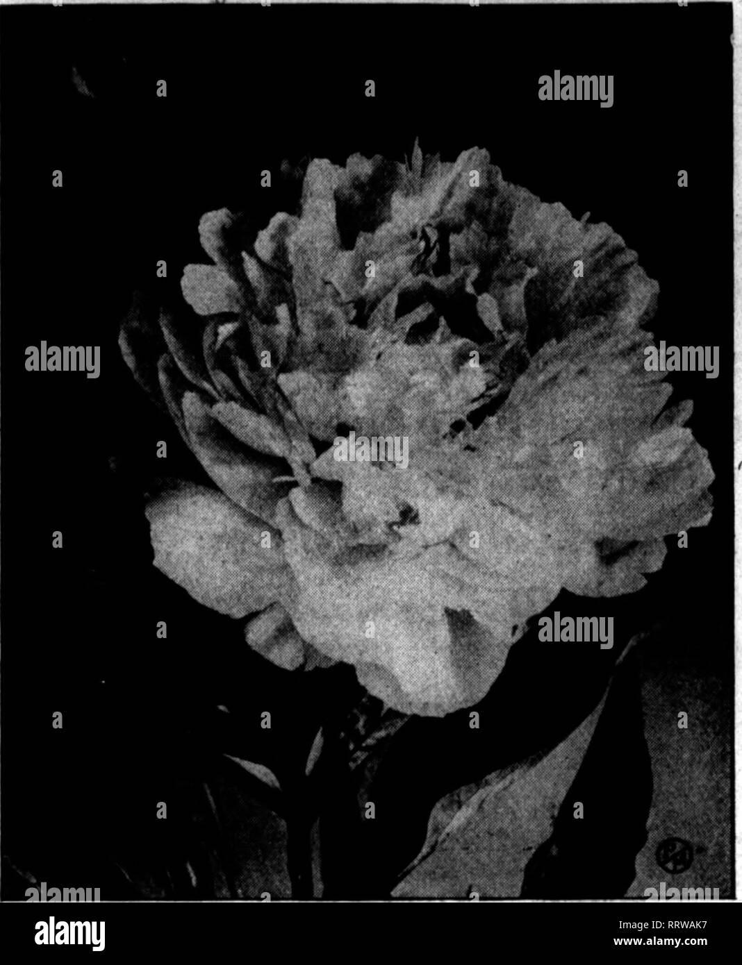 Florists' review [microform]  Floriculture  i(f^pBi vwT- ,«T