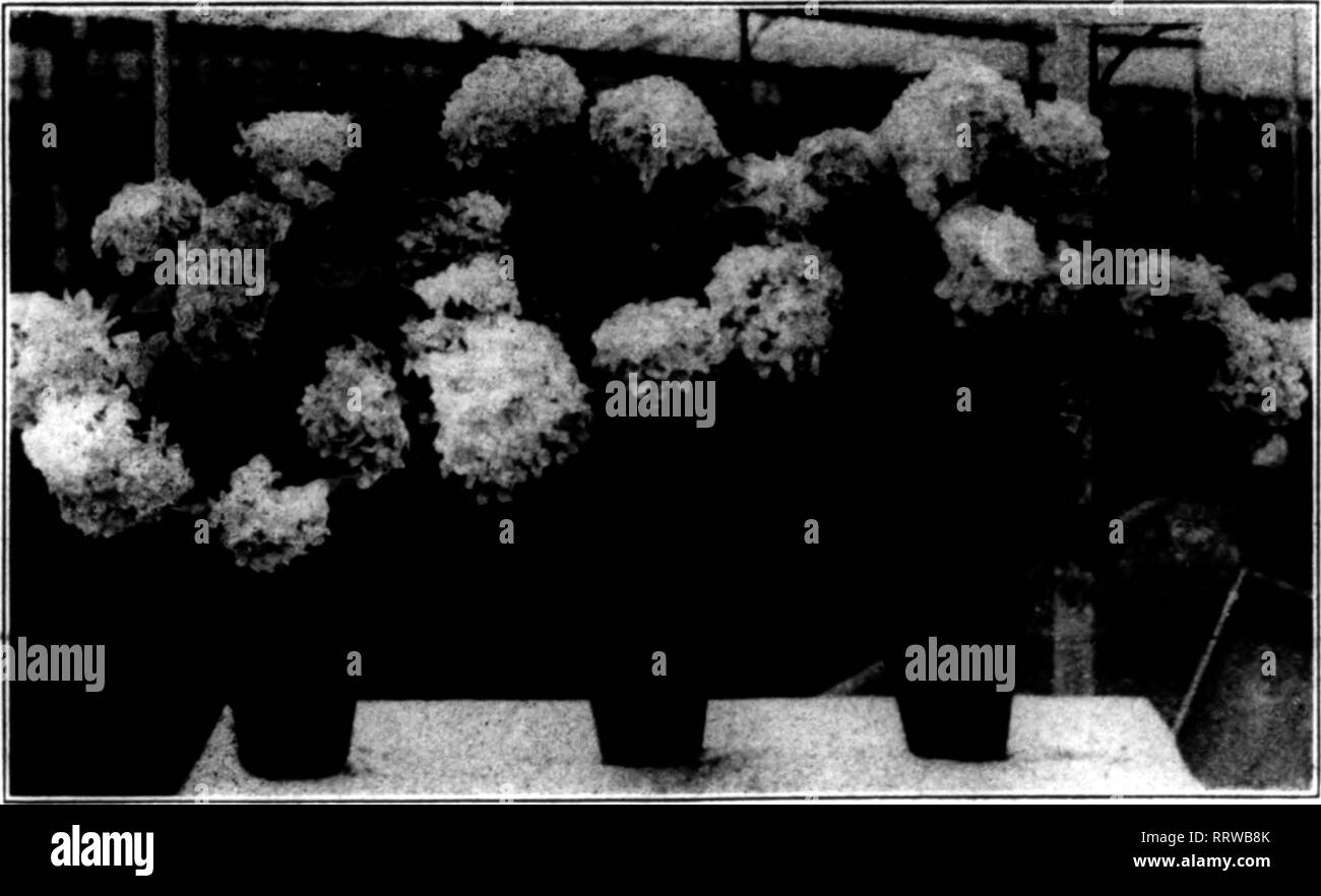 """. Florists' review [microform]. Floriculture. ITS^- 1J'*T'^t5r»T?^'^yiT^isrr^''/w^'^-—?;•-'».—T^ ? '^^^rt^or^rryr'""""^y^: '•^'T'VT ^'""""""""^n^'^r^i' ^ '••^»'T*'»''^f''^rfP!**T-?'f'^ *?F**T""""^^^^vTi^^ 8 The Rorists' Review July 24, 1913. tions that have floricultural courses that have been established with more or less difficulty, mostly because of the need to first procure funds. For the undertak- ing in the Chicago public schools ho immediate appropriation is needed. Class room and equipment are ready. The high school funds available to the vocati6nal department can be used for  - Stock Image"""