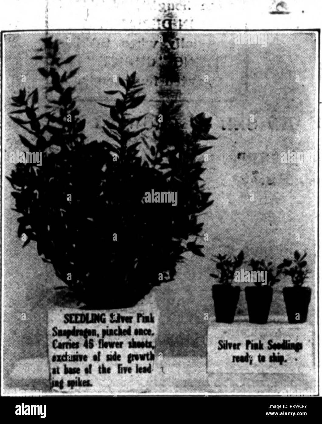 Florists' review [microform]  Floriculture  March 12, 1914