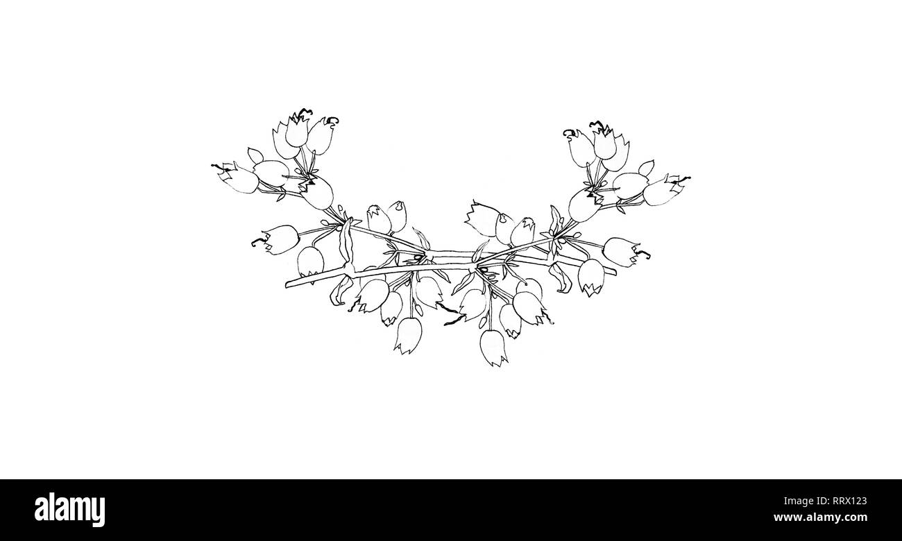 Beautiful engraving flower pattern isolated on white background for design, postcards, banners, emblems, logo. - Stock Image