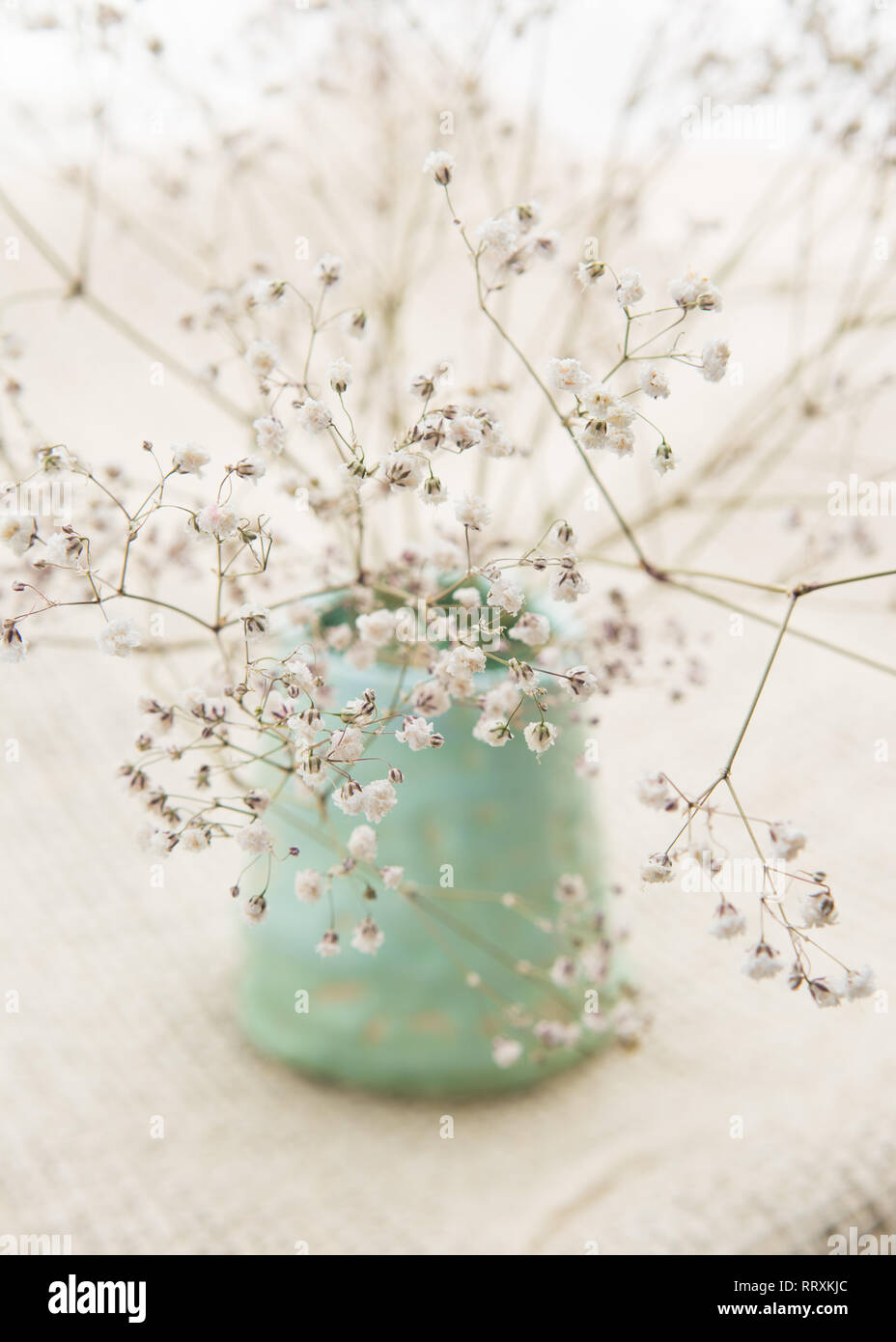 dried natural gypsophila baby's breath flowers simply arranged in handmade pale green pot against neutral hessian background - Stock Image