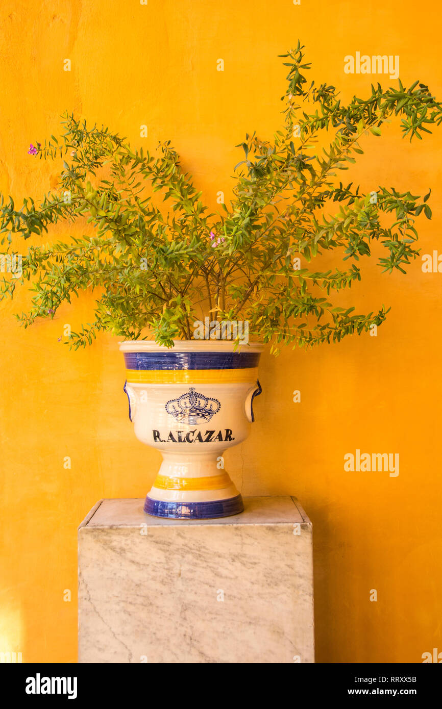 A plant growing out of a pot with the word 'Alcazar' written on it; Alcazar Palace, Seville, Spain. - Stock Image