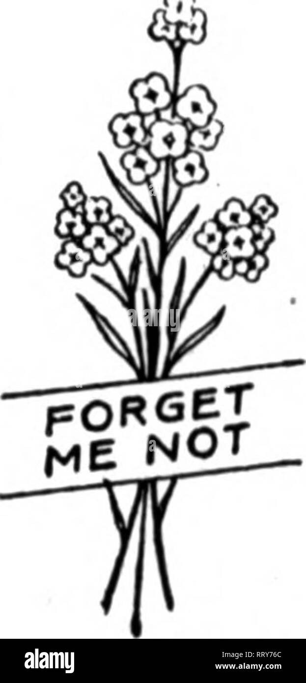 . Florists' review [microform]. Floriculture. 46 The Weekly Florists^ Review* JUNB 13. 1912. Seed Trade Hews. AMESICAir SEED TRADE AB80CIATI0M. Pres., Leonard H. Vaughan, Chicago; First Vlce-Pres., M. H. Duryea, New York City; Sec'y and Treas., C. E. Kendel, CleTeland, O. Thirtieth annual convention, Chicago, June 25 to 27. 1912. The death of Jerome B. Rice, which occurred June 8, is reported in this week's obituary column. See page 16. Visited Chicago : Marshall H. Duryea, vice-president and treasurer of the Nun- gesser-Dickinson Seed Co., successor to Henry Nungesser & Co., New York. F.  - Stock Image