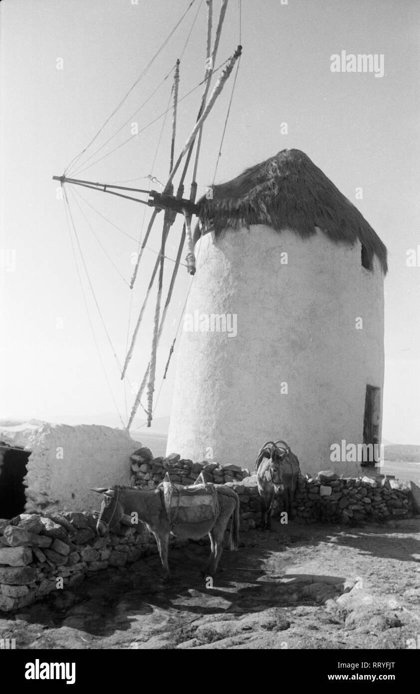 Griechenland, Greece - Ein malerisches Idyll: Windmühle mit einem Esel davor, Griechenland, 1950er Jahre. Scenic: a donkey in front of a typical Greek windmill, Greece, 1950s. Stock Photo