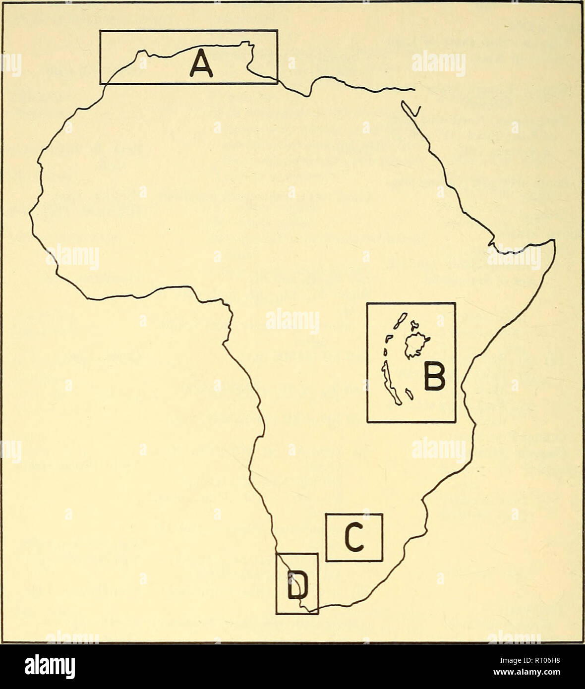 . Annals of the South African Museum = Annale van die Suid-Afrikaanse Museum. Natural history. 284 ANNALS OF THE SOUTH AFRICAN MUSEUM. Fig. 3. Map of Africa indicating major areas of discovery of hipparionids. Details of areas A-C are shown in figs. 4-6, while area D is enlarged in fig. 1. Algeria—figs. 3, 4) occur between two marine horizons, namely, (1) a Burdi- galian one, characterized by its mollusc and echinid fauna and (2) an Upper Miocene Lithotamnium limestone. On this stratigraphical basis, the Hipparion horizon has been dated as Tortonian, i.e. Upper Vindobonian (Late Miocene) immed - Stock Image