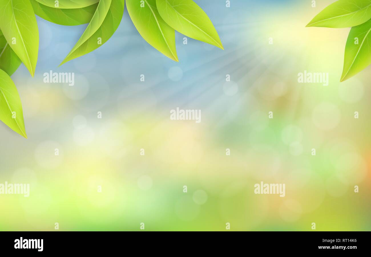 Green juicy leaves on a blurred background. - Stock Vector