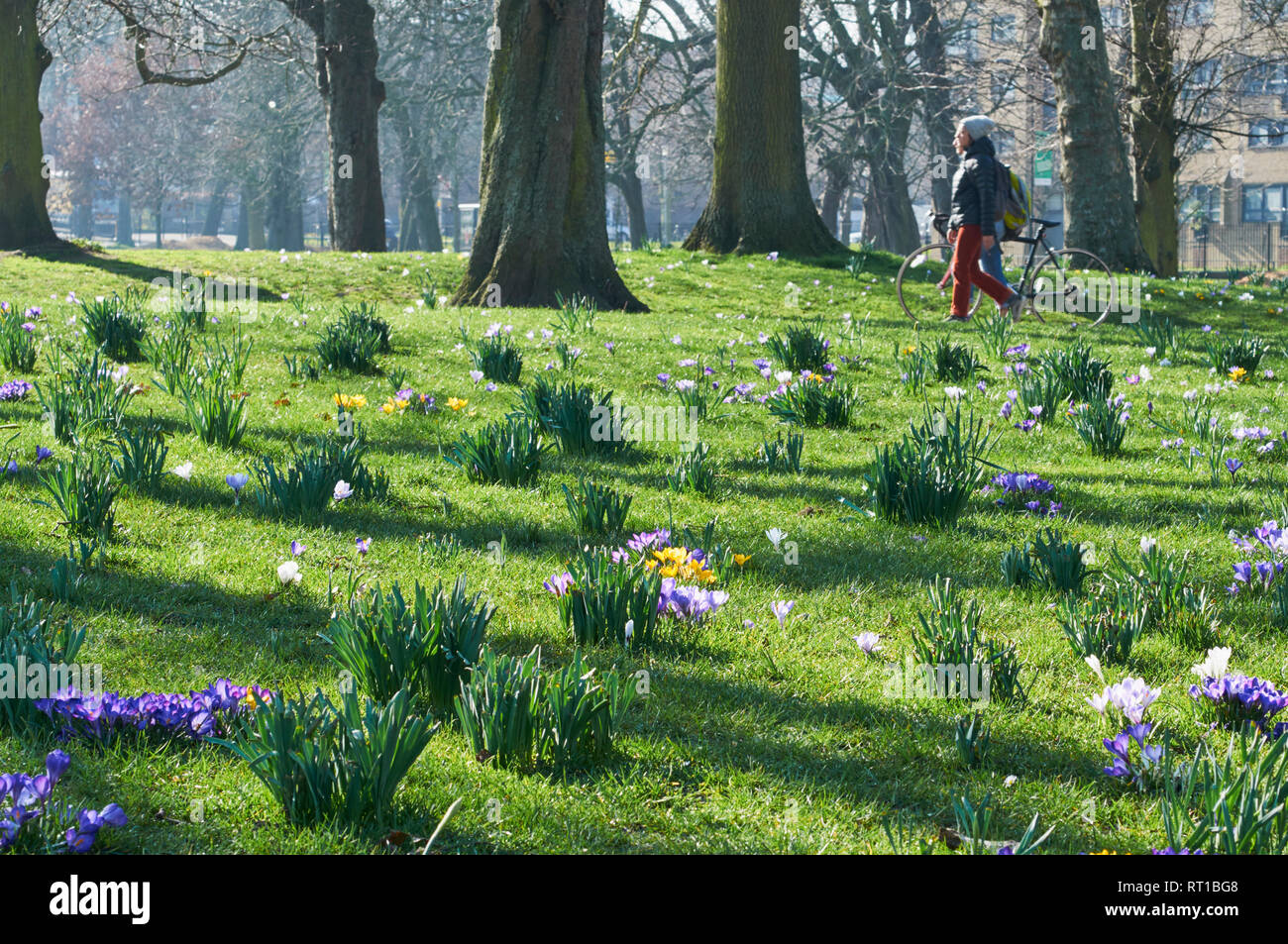 Clissold Park, Stoke Newington, North London, UK. 27th Feb 2019. On the morning of 27th February 2019, with snowdrops springing up in the grass and passers by, during the very warm weather of late February 2019 Credit: Richard Barnes/Alamy Live News - Stock Image