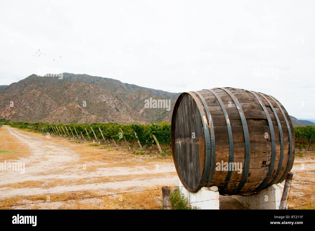 Vineyard - Cafayate - Argentina - Stock Image