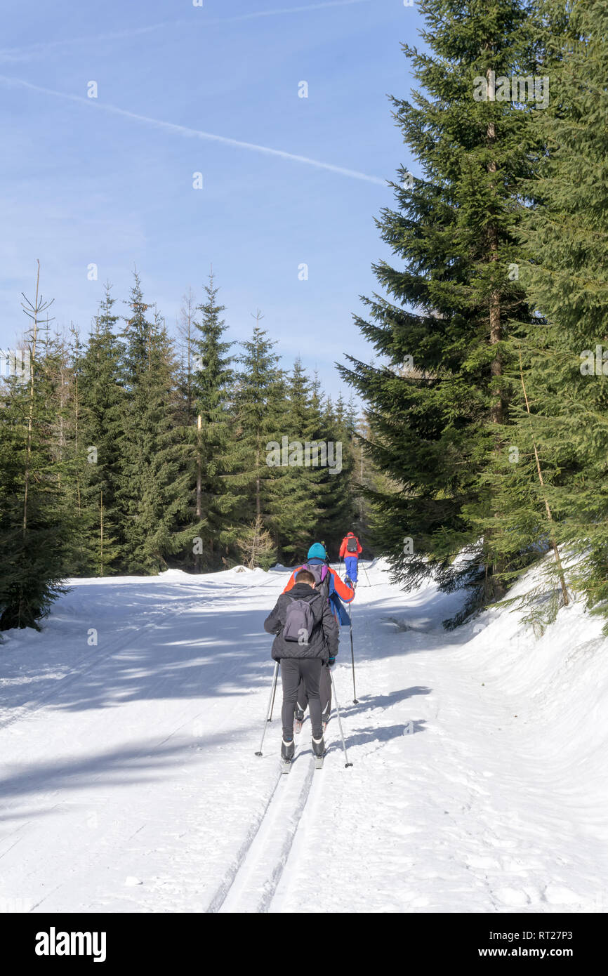 Group of cross-country Skiers runs on groomed ski track in sunny winter day. Winter mountain landscape: Jakuszyce, Jizera Mountains, Poland. - Stock Image