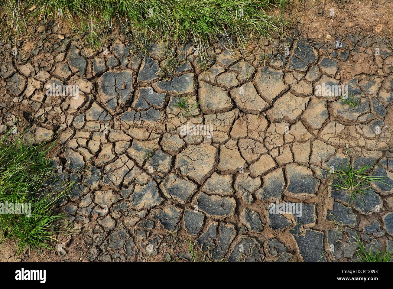 Dry cracked mud in a farmers field - Stock Image