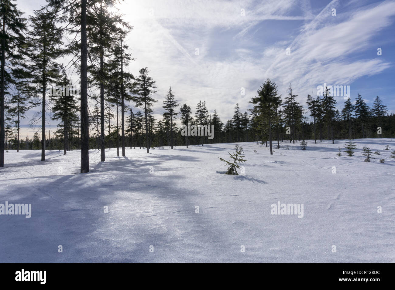 Winter mountain landscape with blue sky in sunny day. Jizera Mountains, surroundings of Jakuszyce, Poland. - Stock Image