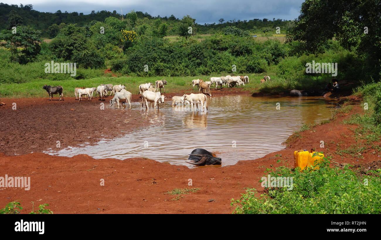 Myanmar, Rural Life - Stock Image