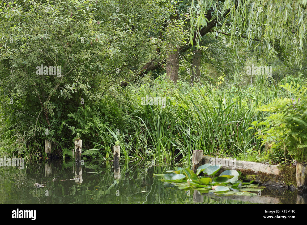 Riparian zone of a small stream in the Spreewald - Stock Image