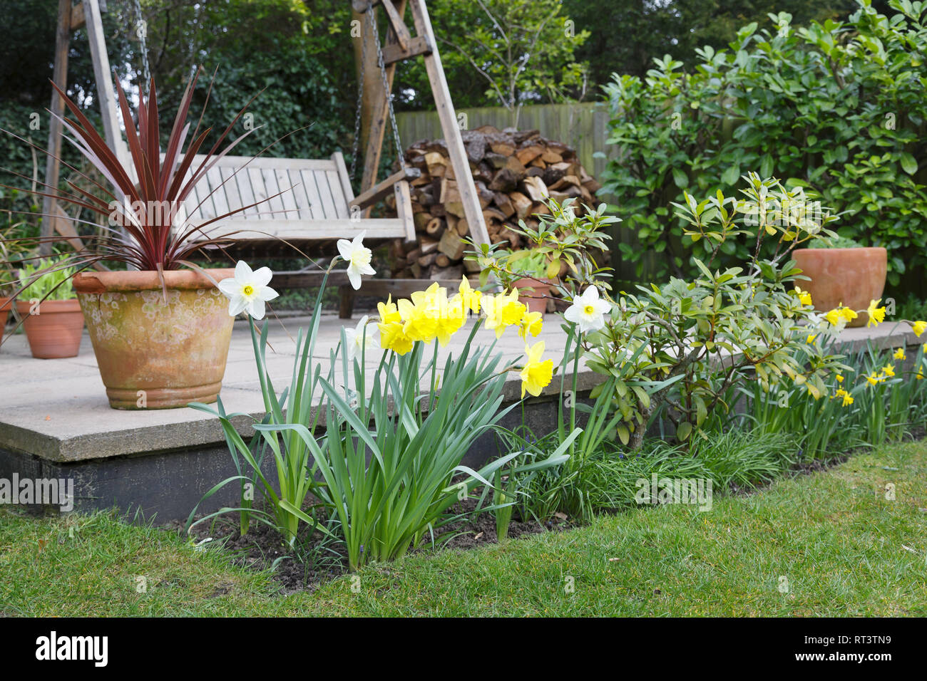 Daffodils In A Garden Flower Bed In Spring In Front Of A ...