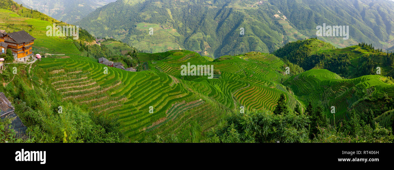Longsheng Rice Terrace, Dragon's Backbone, Longji, China. - Stock Image