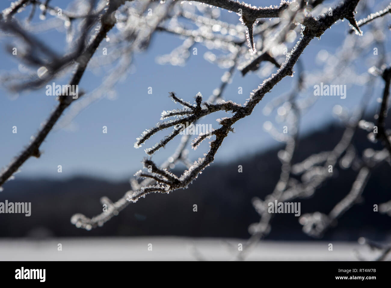 An abstract photo of hoar frost on tree branches near Coeur d'Alene, Idaho. - Stock Image