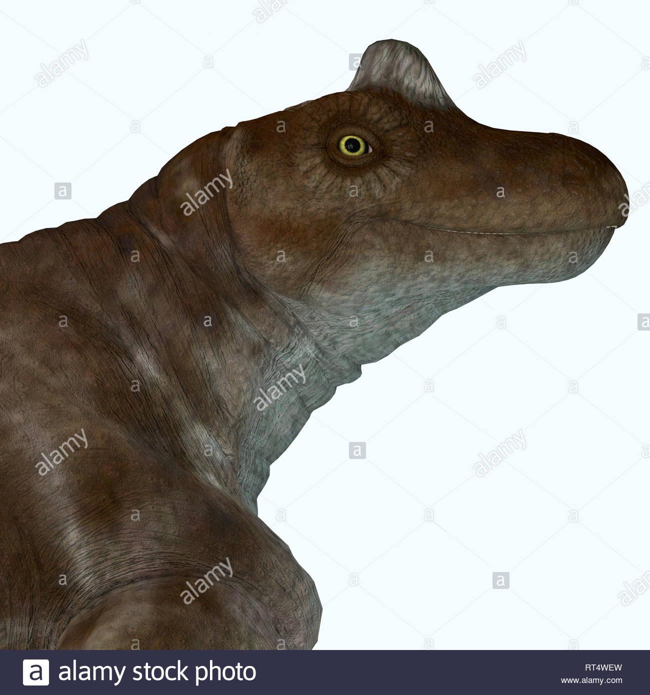Keratocephalus dinosaur portrait. - Stock Image