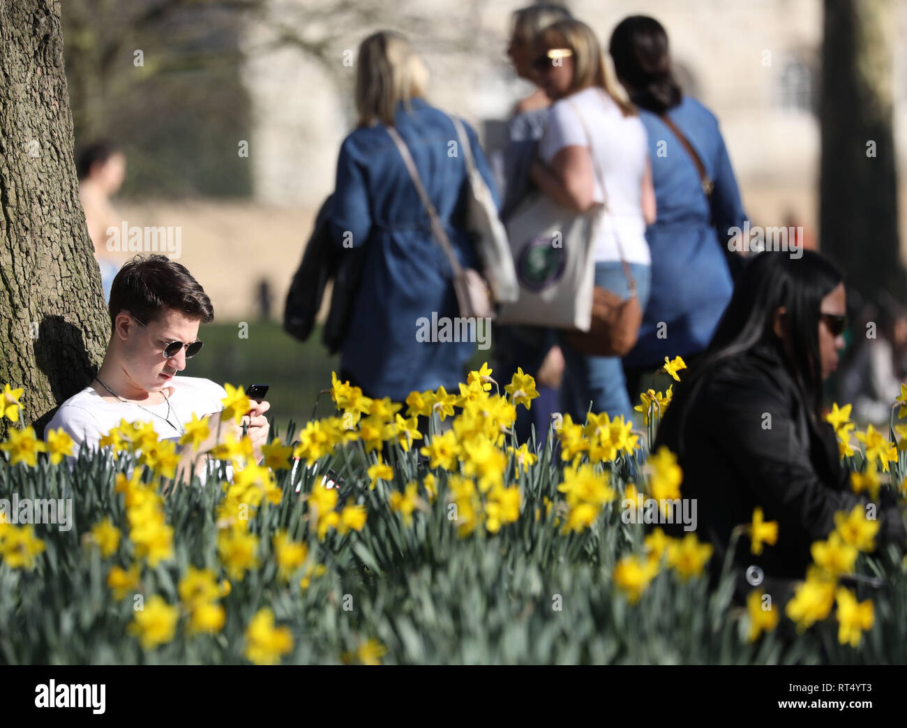 Hot Weather February 2019 Daffodils in  St James' Park as people  enjoy the sunshine   picture by Gavin Rodgers/ Pixel8000 27.2.19 - Stock Image