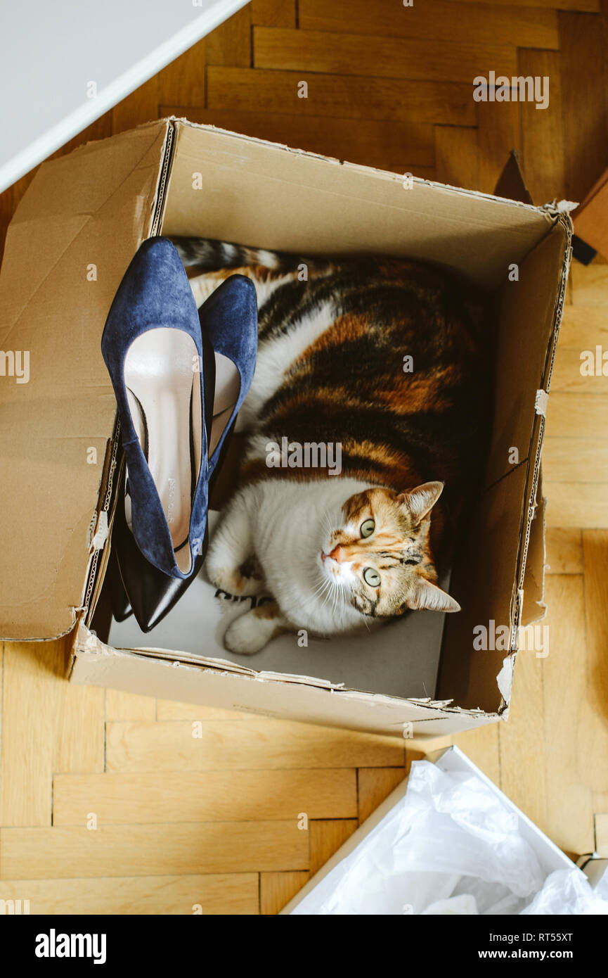 View from above of unboxing unpacking several pairs of new shoes bought via online store and curious cat pet inside the box cardboard  - Stock Image