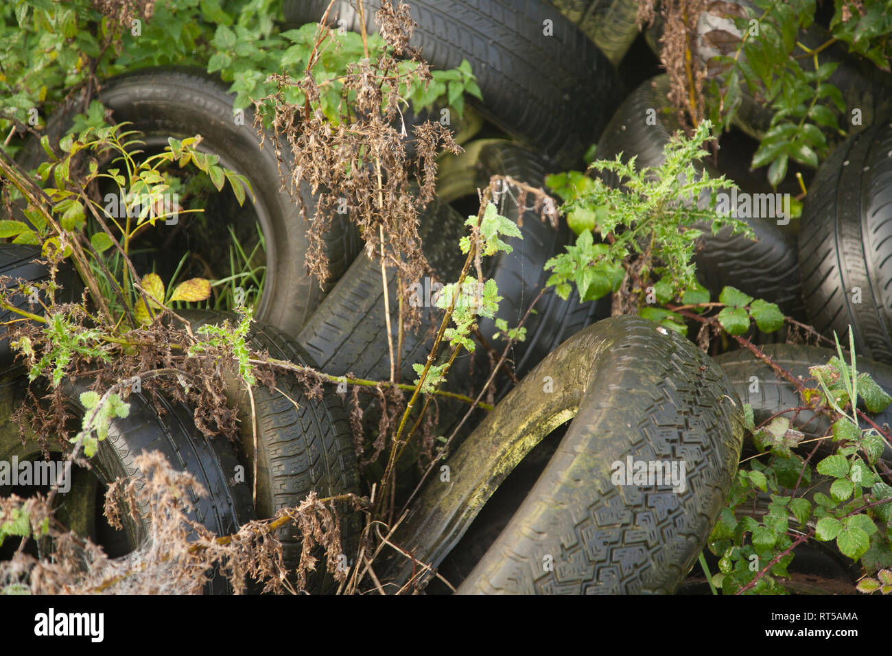 Old Car tyres dumped in hedgerow in the countryside in Worcestershire, England - Stock Image