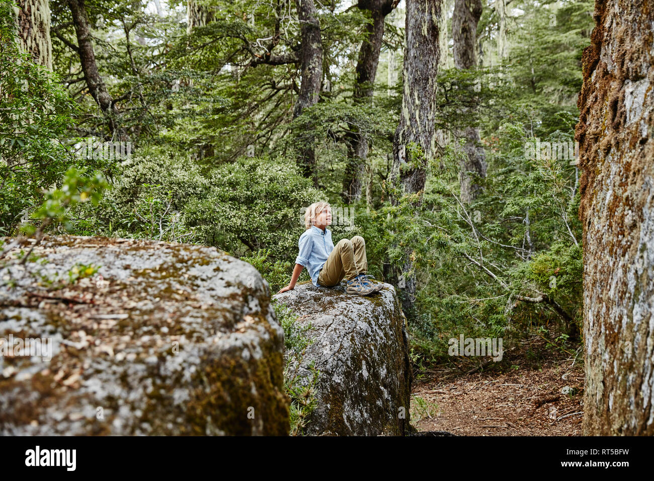Chile, Puren, Nahuelbuta National Park, boy sitting on a rock in forest - Stock Image