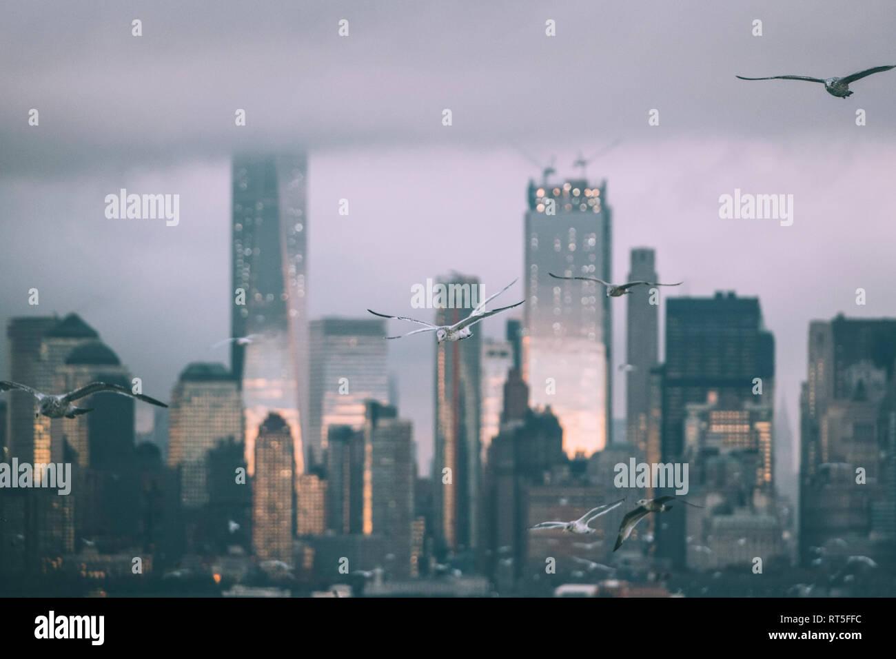 USA, New York, Panorama of Manhattan skyline, birds fly - Stock Image