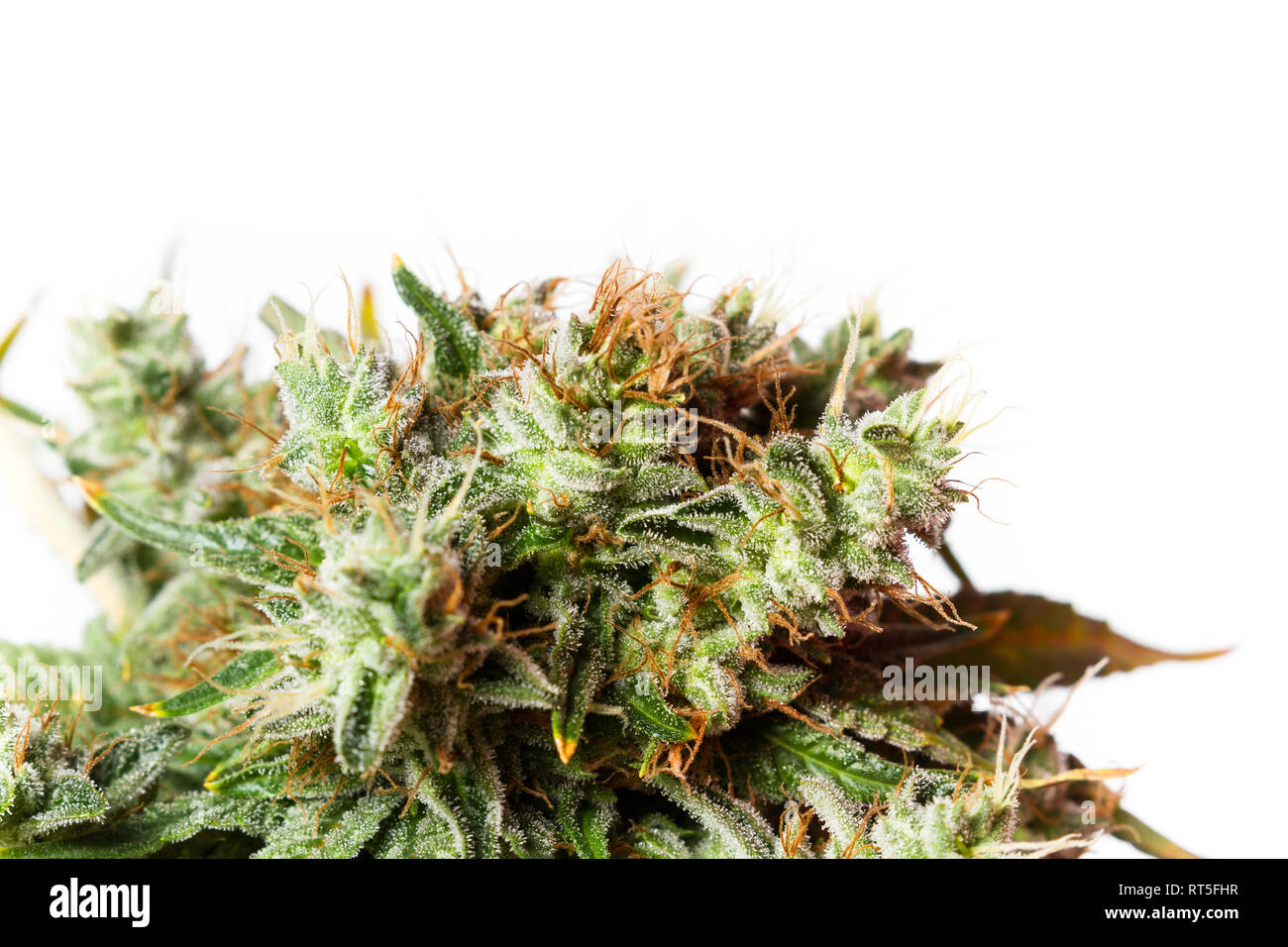 Popular cannabis strain known as Gorilla Glue number four isolated