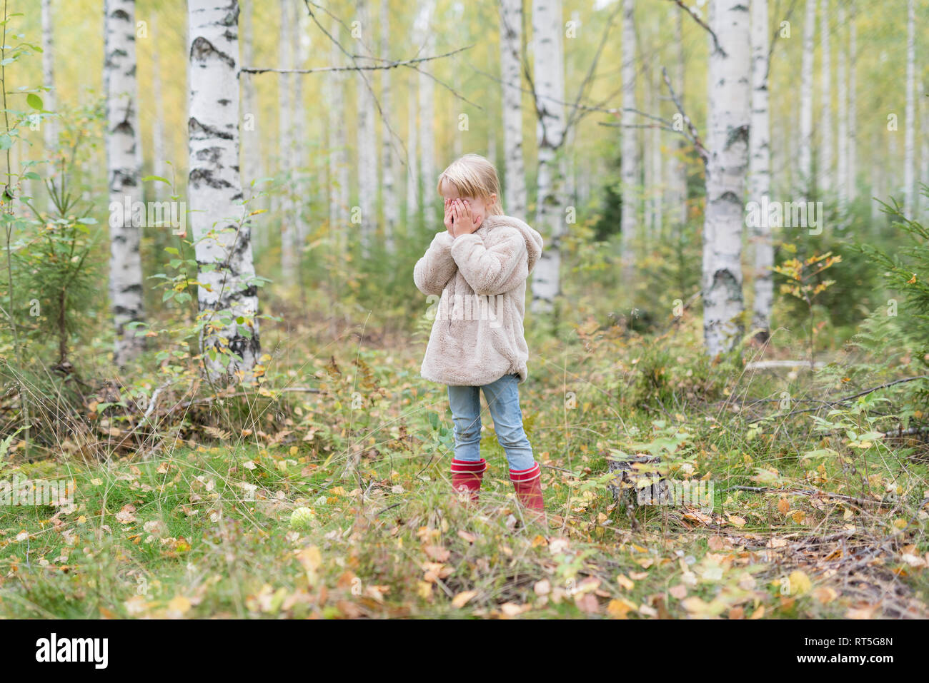 Blond girl playing Hide and Seek in a birch forest - Stock Image