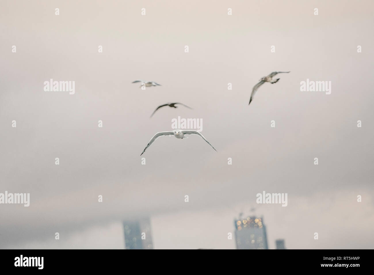 USA, New York, Manhattan, birds fly - Stock Image
