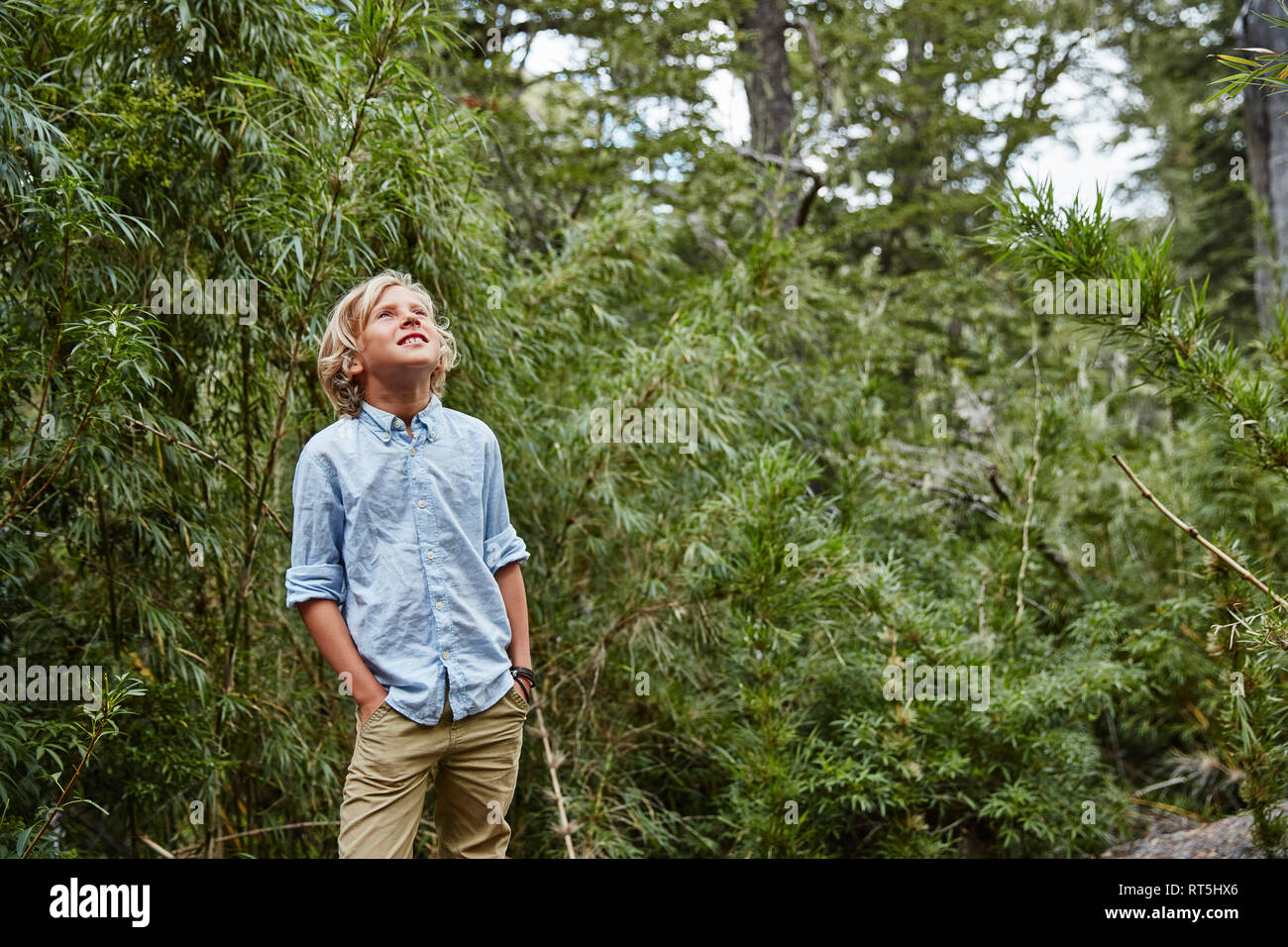 Chile, Puren, Nahuelbuta National Park, boy standing in bamboo forest looking up - Stock Image