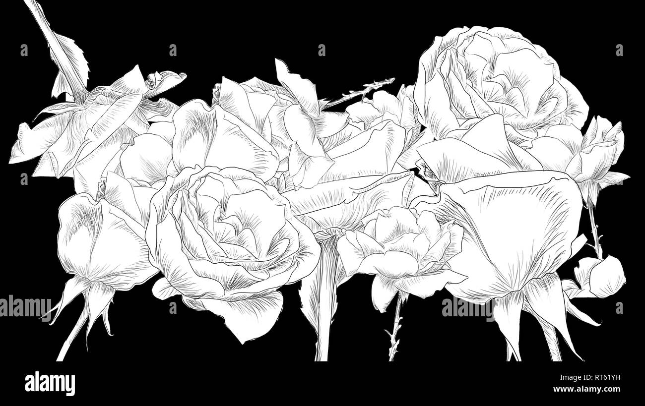 Line art collage of roses on black background_by jziprian - Stock Image